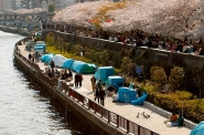 Cardboard village at Sumida River during cherry blossom season