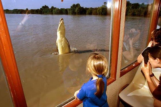 Jumping crocodile, Adelaide River