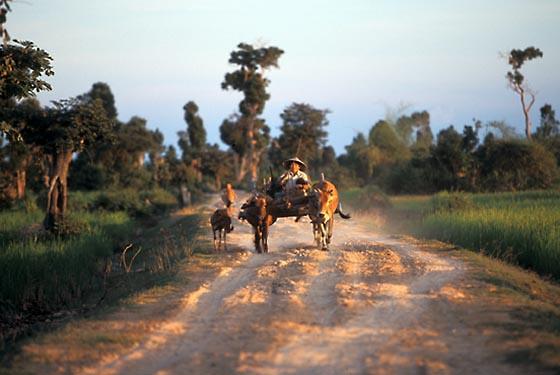 Farmer with ox-cart near Kompong Thom