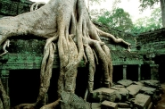 Back to nature, Ta Prohm Temple, Angkor Thom