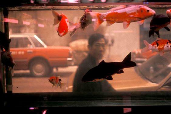 Fengshui aquarium, Wanchai