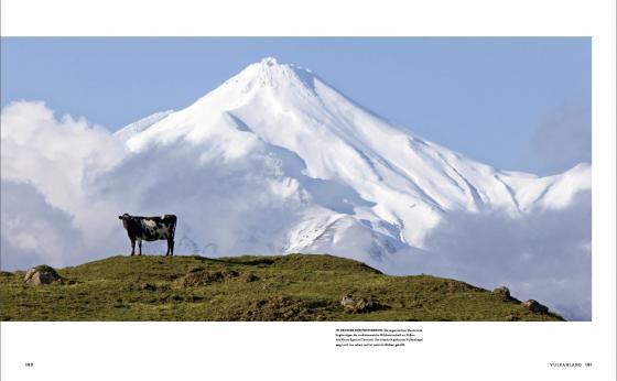 Friesian cow and Mount Taranaki